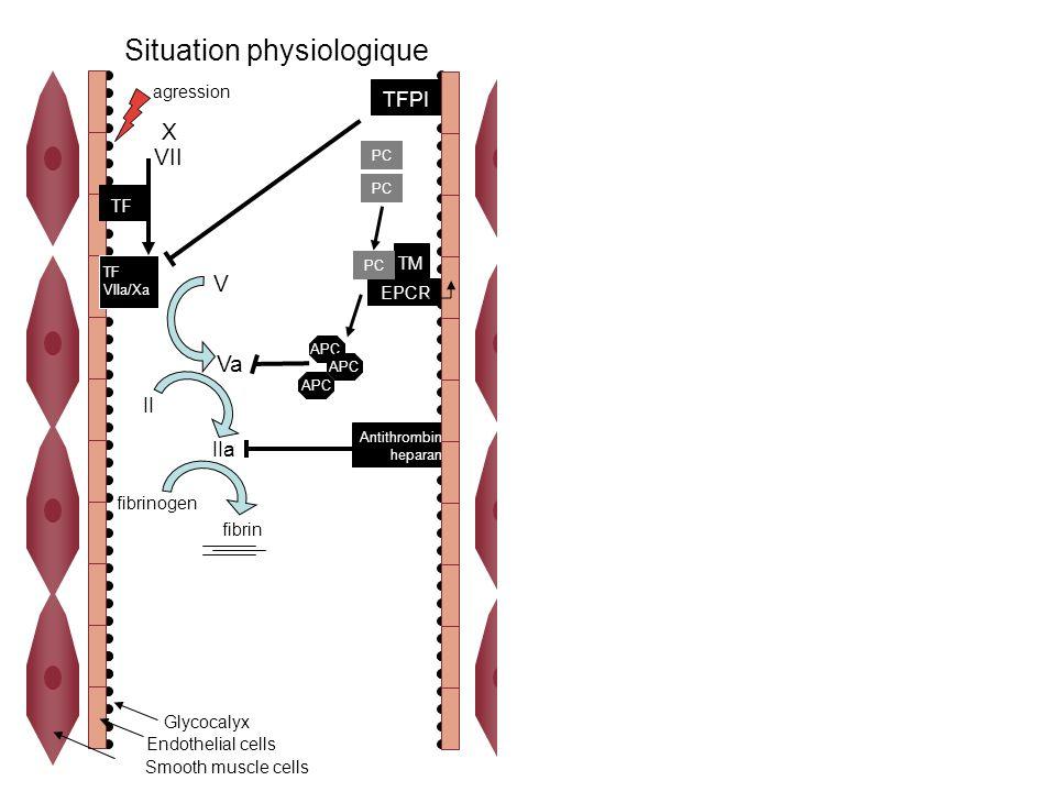 X VII TF VIIa/Xa V Va II fibrin fibrinogen PC IIa APC TM EPCR PC Antithrombin heparan TFPI agression Glycocalyx Endothelial cells Smooth muscle cells