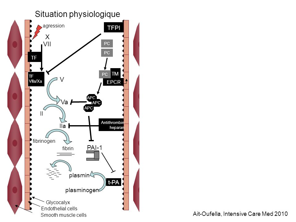 X VII TF VIIa/Xa V Va II fibrin fibrinogen plasminogen t-PA plasmin PC IIa APC PAI-1 TM EPCR PC Antithrombin heparan TFPI agression Glycocalyx Endothe
