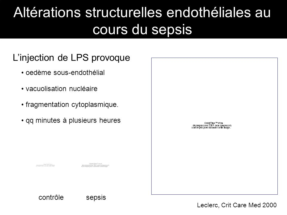Altérations structurelles endothéliales au cours du sepsis Linjection de LPS provoque fragmentation cytoplasmique. qq minutes à plusieurs heures vacuo