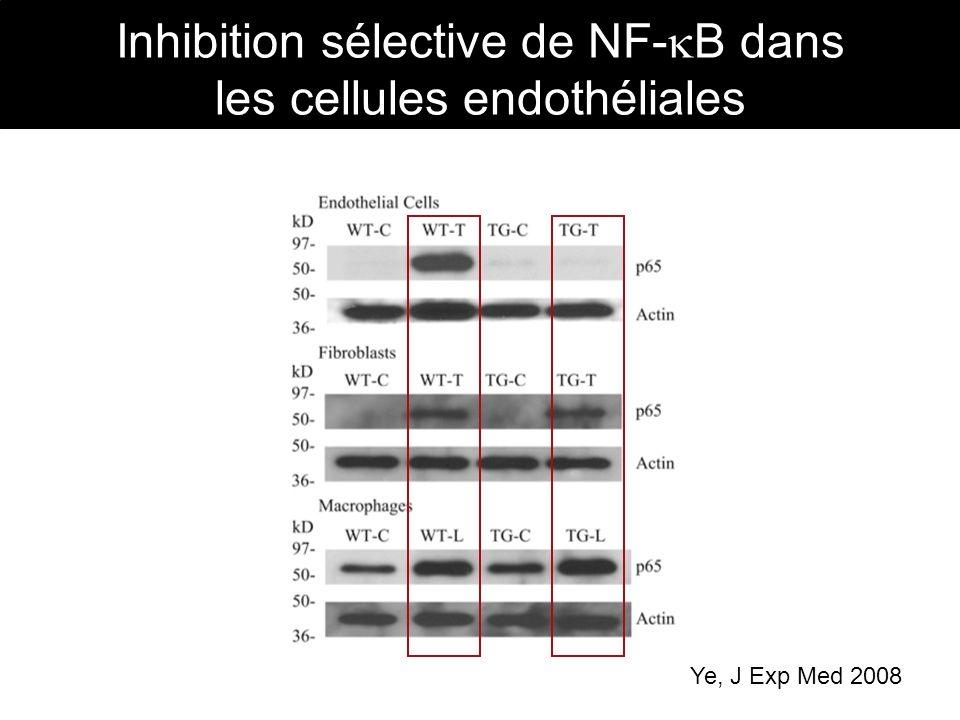 Inhibition sélective de NF- B dans les cellules endothéliales Ye, J Exp Med 2008