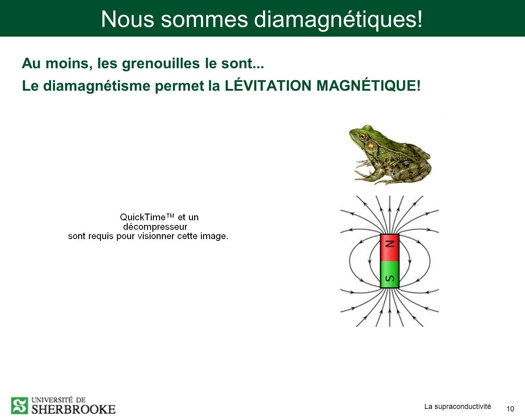 La supraconductivité 10 Au moins, les grenouilles le sont... Le diamagnétisme permet la LÉVITATION MAGNÉTIQUE! Nous sommes diamagnétiques!