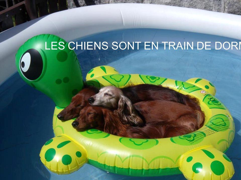 LES CHIENS SONT EN TRAIN DE DORMIR