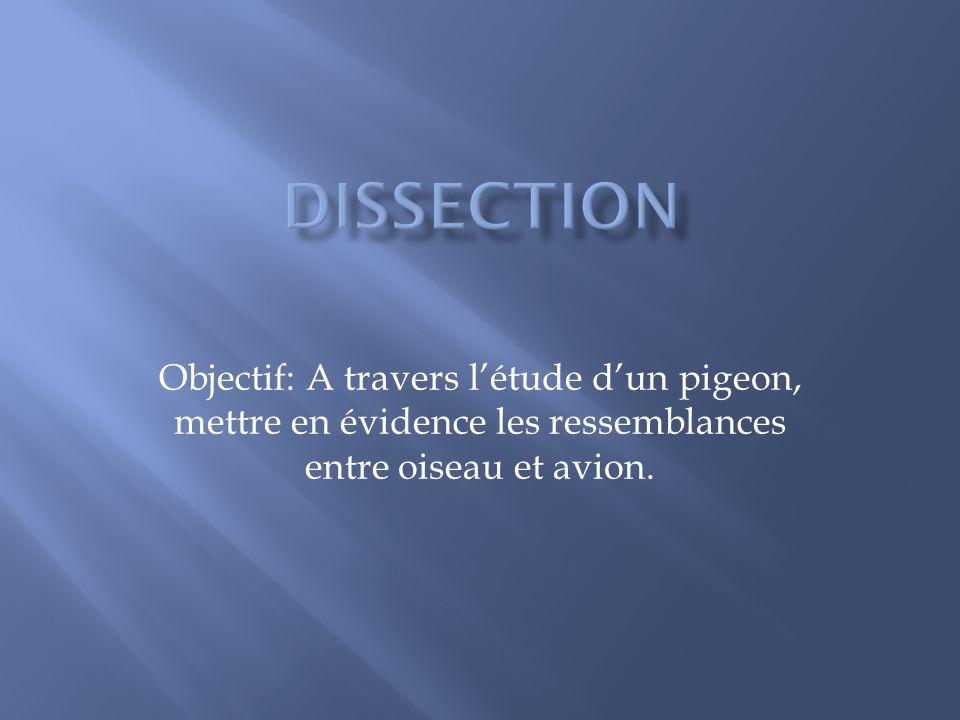 Objectif: A travers létude dun pigeon, mettre en évidence les ressemblances entre oiseau et avion.