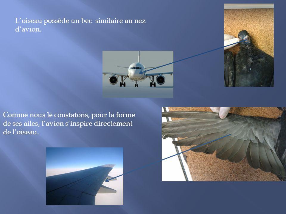 Loiseau possède un bec similaire au nez davion. Comme nous le constatons, pour la forme de ses ailes, lavion sinspire directement de loiseau.