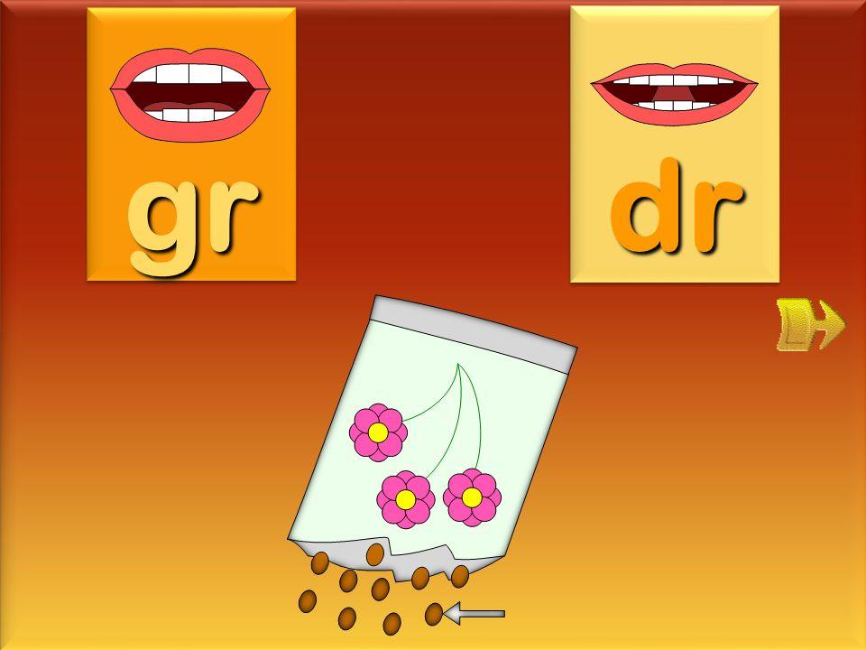 dromadaire gr dr