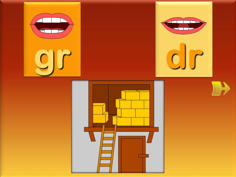 graine gr dr
