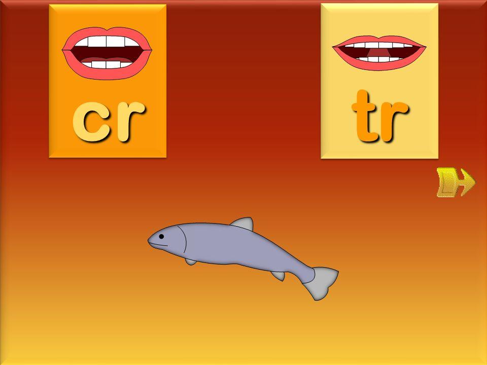 cruche cr tr