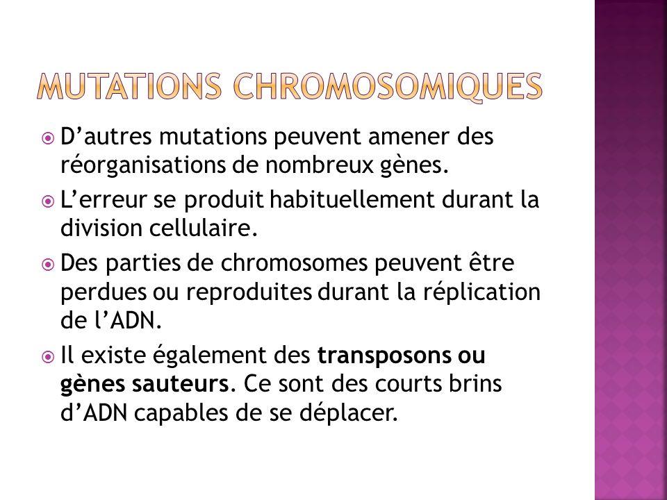 Dautres mutations peuvent amener des réorganisations de nombreux gènes. Lerreur se produit habituellement durant la division cellulaire. Des parties d