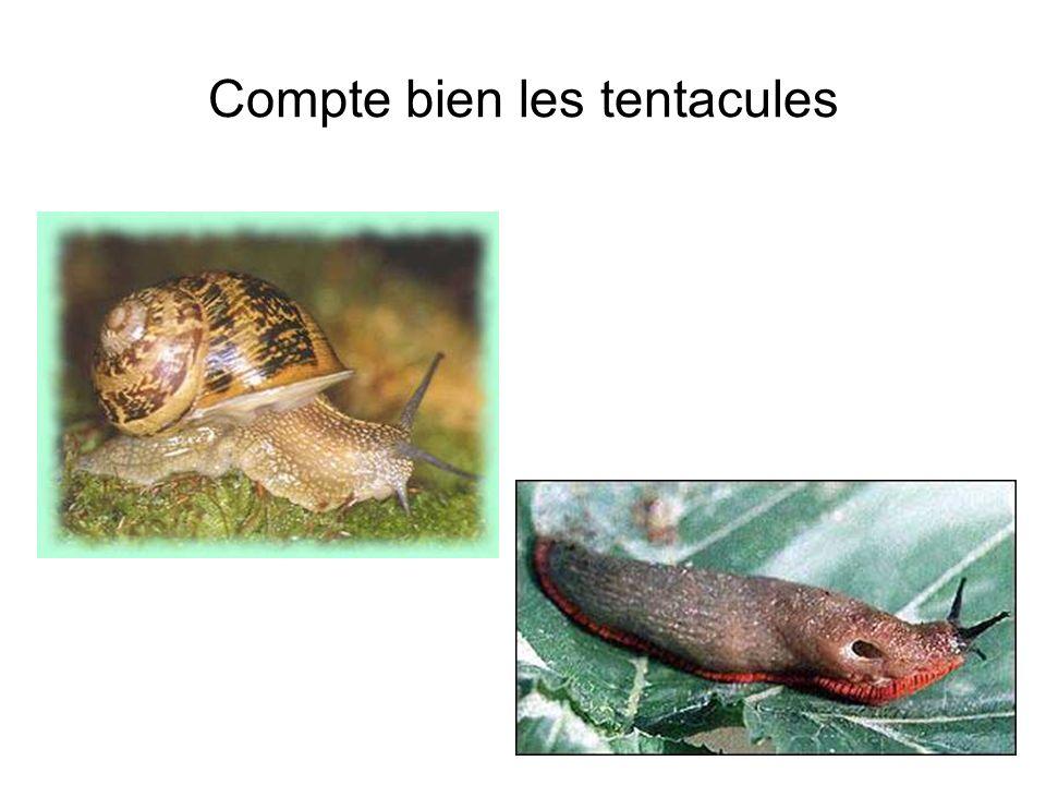 Tous les escargots sont à la fois mâle et femelle : ils sont hermaphrodites.