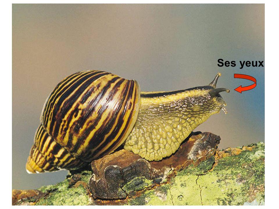 Regarde le trou par lequel la limace pond ses oeufs.