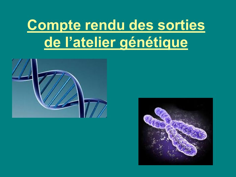 Compte rendu des sorties de latelier génétique