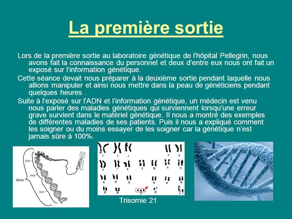 La première sortie (suite) Après les explications du médecins sur les maladies génétiques, nous sommes allés dans une salle voisine où une généticienne nous a montré sur lordinateur une étude du réseau mitochondrial.
