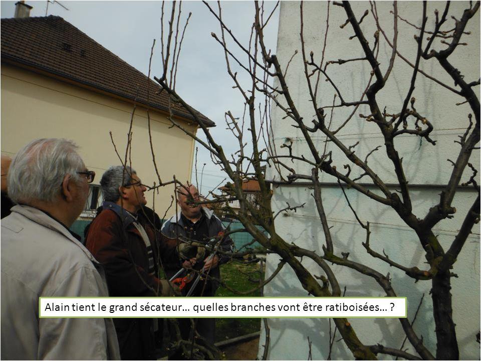 Alain tient le grand sécateur… quelles branches vont être ratiboisées… ?