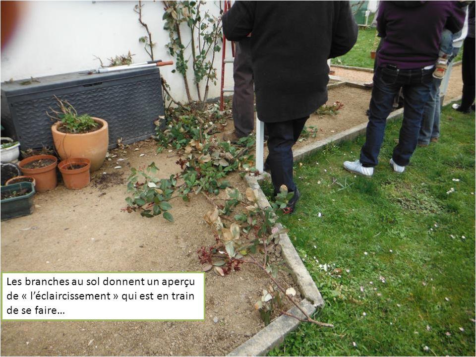 Les branches au sol donnent un aperçu de « léclaircissement » qui est en train de se faire…