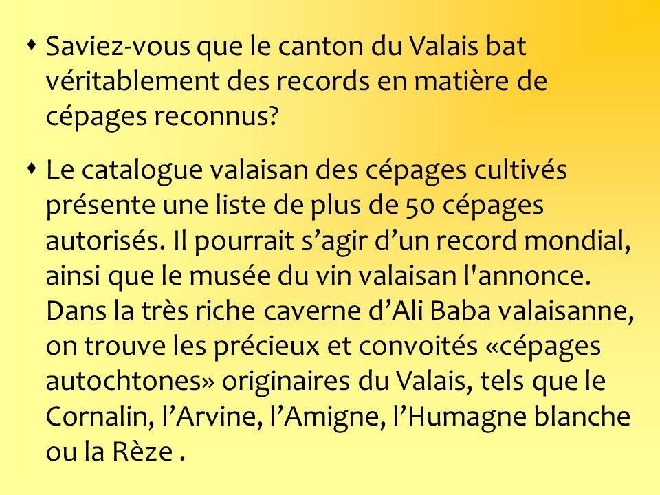 Saviez-vous que le canton du Valais bat véritablement des records en matière de cépages reconnus? Le catalogue valaisan des cépages cultivés présente