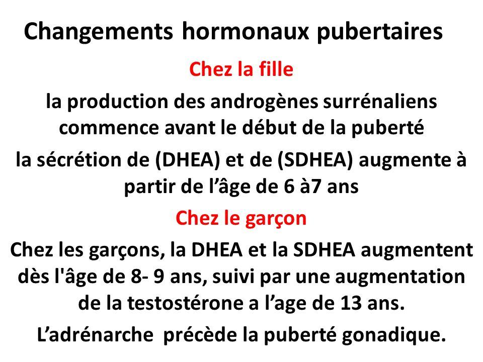 Changements hormonaux pubertaires Chez la fille la production des androgènes surrénaliens commence avant le début de la puberté la sécrétion de (DHEA) et de (SDHEA) augmente à partir de lâge de 6 à7 ans Chez le garçon Chez les garçons, la DHEA et la SDHEA augmentent dès l âge de 8- 9 ans, suivi par une augmentation de la testostérone a lage de 13 ans.