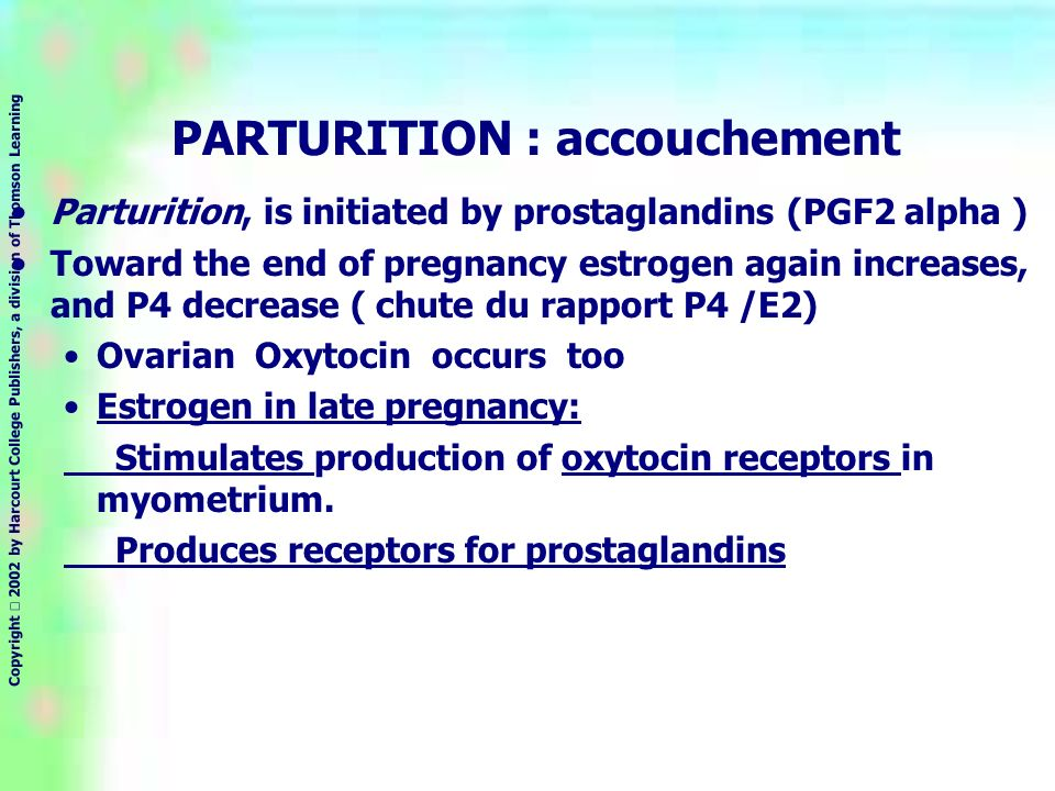 Copyright 2002 by Harcourt College Publishers, a division of Thomson Learning PARTURITION : accouchement Parturition, is initiated by prostaglandins (PGF2 alpha ) Toward the end of pregnancy estrogen again increases, and P4 decrease ( chute du rapport P4 /E2) Ovarian Oxytocin occurs too Estrogen in late pregnancy: Stimulates production of oxytocin receptors in myometrium.