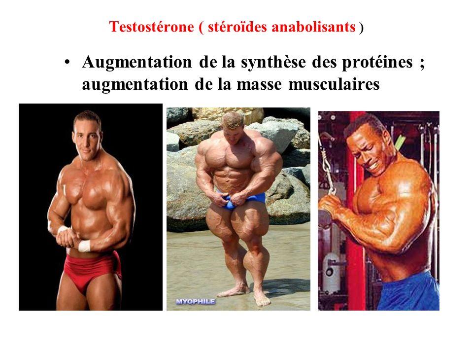 Testostérone ( stéroïdes anabolisants ) Augmentation de la synthèse des protéines ; augmentation de la masse musculaires
