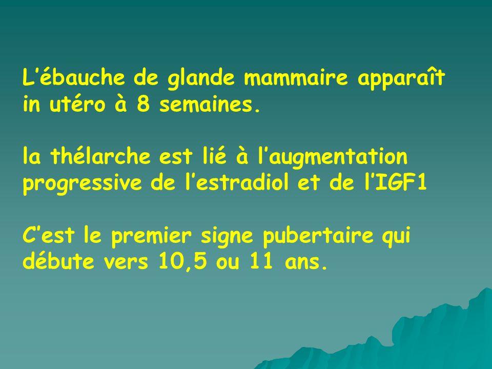 Lébauche de glande mammaire apparaît in utéro à 8 semaines.