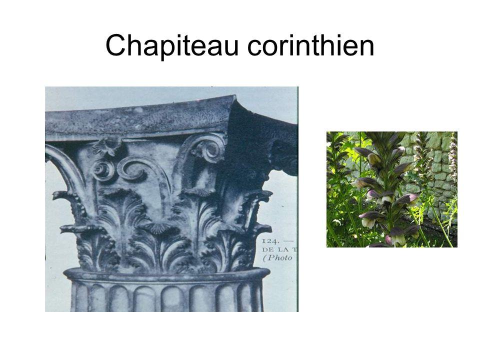 Chapiteau corinthien