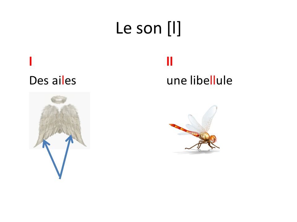 Le son [l] lll Des ailesune libellule