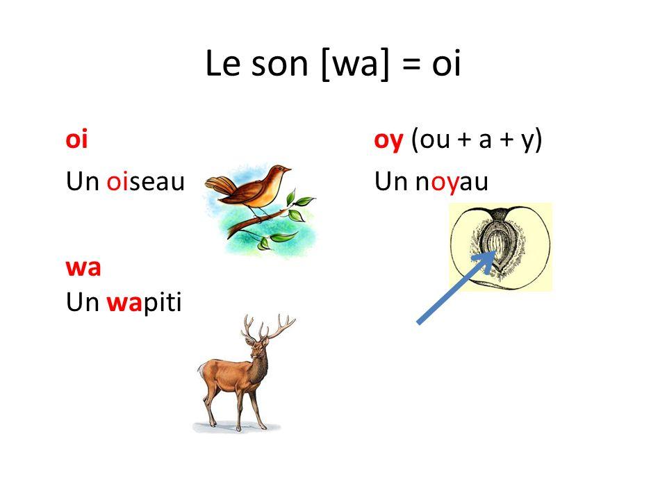 Le son [wa] = oi oioy (ou + a + y) Un oiseauUn noyau wa Un wapiti