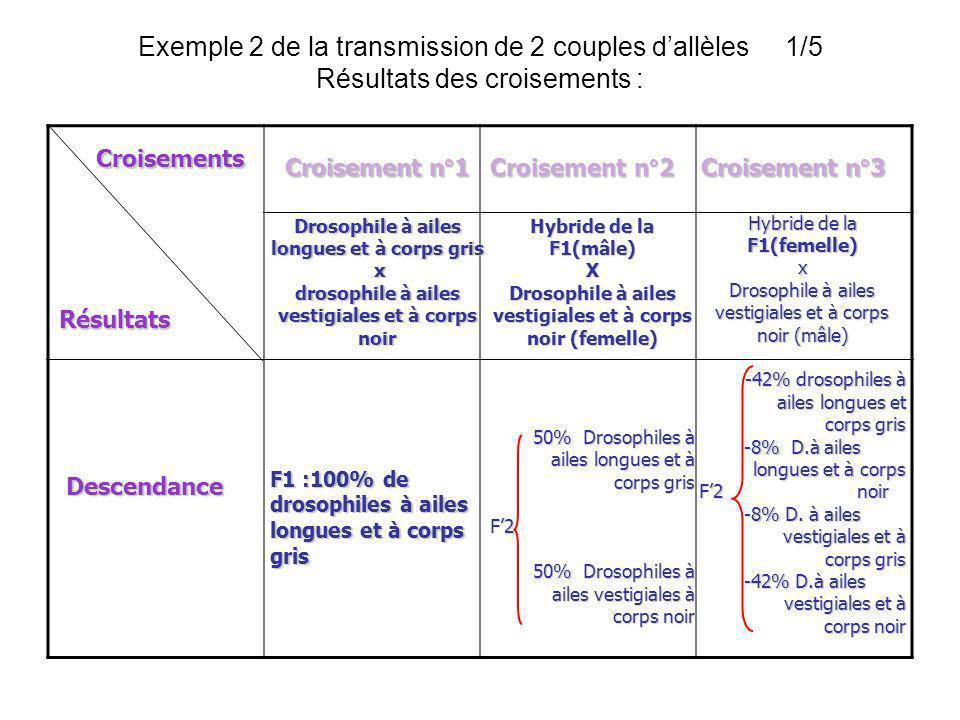 Exemple 2 de la transmission de 2 couples dallèles 1/5 Résultats des croisements : Croisements Résultats Croisement n°1Croisement n°2Croisement n°3 De