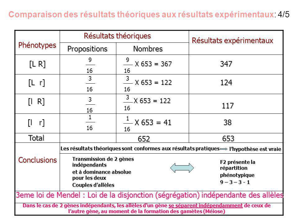 Comparaison des résultats théoriques aux résultats expérimentaux: 4/5 9 16 3 16 1 16 3 16 9 16 3 16 3 16 1 16Phénotypes [L R] [L r] [l R] [l r] Résult