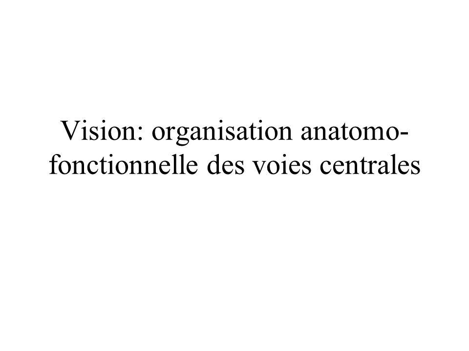 Vision: organisation anatomo- fonctionnelle des voies centrales