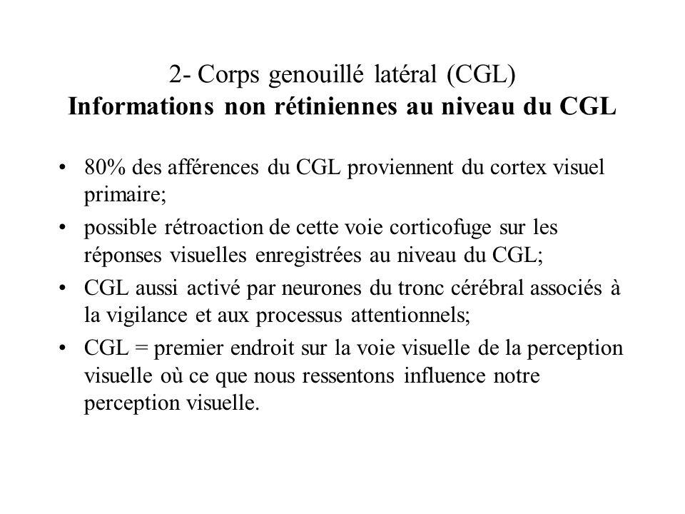 2- Corps genouillé latéral (CGL) Informations non rétiniennes au niveau du CGL 80% des afférences du CGL proviennent du cortex visuel primaire; possib