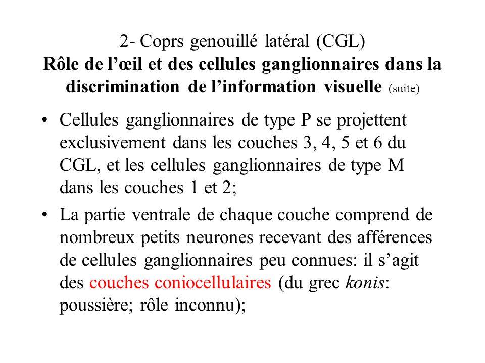 2- Coprs genouillé latéral (CGL) Rôle de lœil et des cellules ganglionnaires dans la discrimination de linformation visuelle (suite) Cellules ganglion