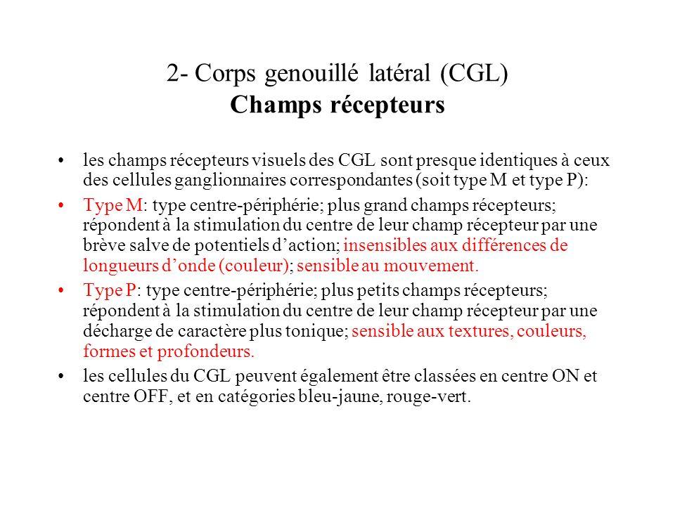 2- Corps genouillé latéral (CGL) Champs récepteurs les champs récepteurs visuels des CGL sont presque identiques à ceux des cellules ganglionnaires co