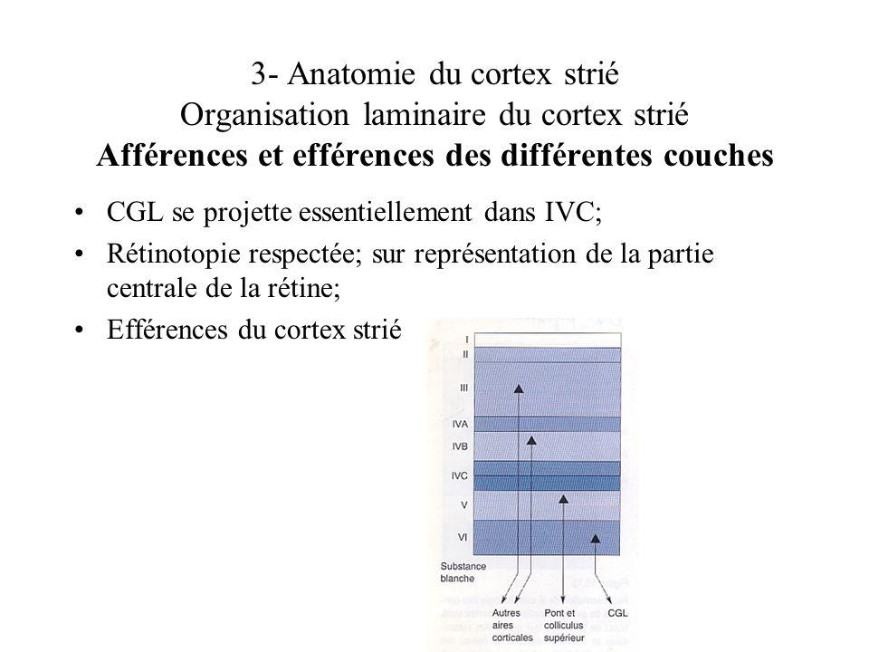 3- Anatomie du cortex strié Organisation laminaire du cortex strié Afférences et efférences des différentes couches CGL se projette essentiellement da