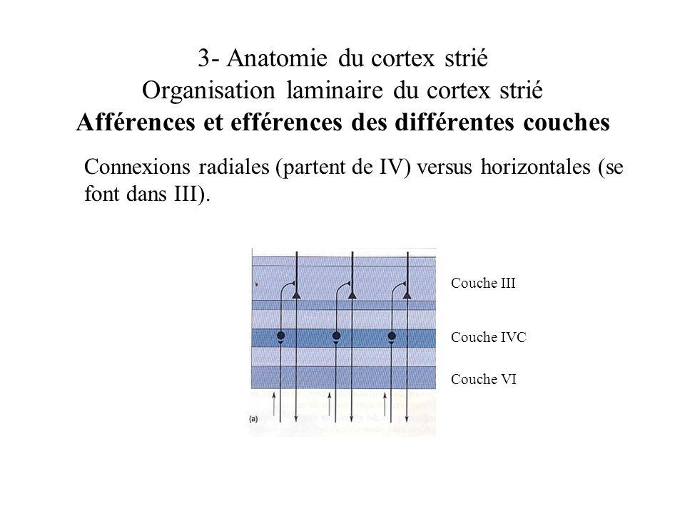 3- Anatomie du cortex strié Organisation laminaire du cortex strié Afférences et efférences des différentes couches Connexions radiales (partent de IV