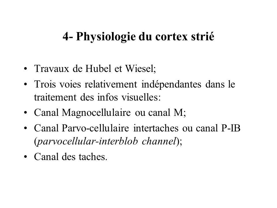 4- Physiologie du cortex strié Travaux de Hubel et Wiesel; Trois voies relativement indépendantes dans le traitement des infos visuelles: Canal Magnoc