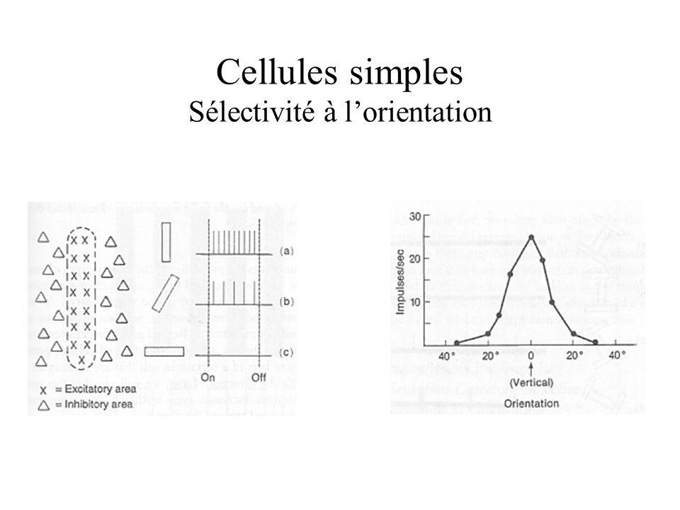 Cellules simples Sélectivité à lorientation