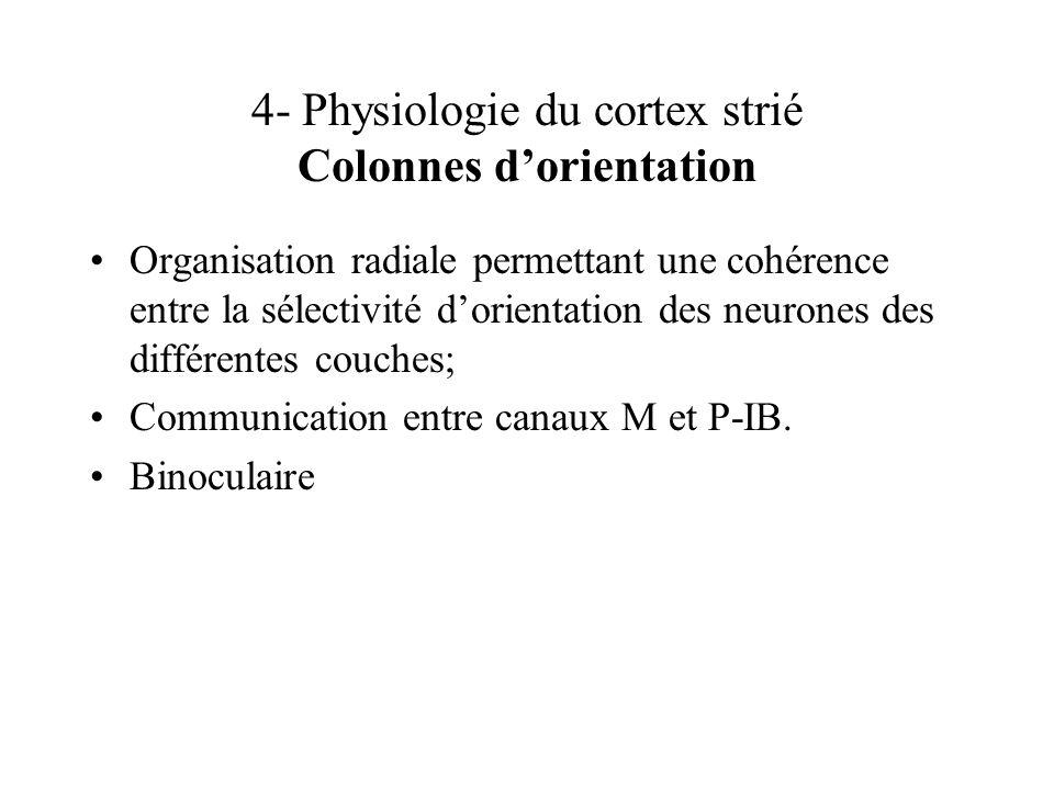 4- Physiologie du cortex strié Colonnes dorientation Organisation radiale permettant une cohérence entre la sélectivité dorientation des neurones des