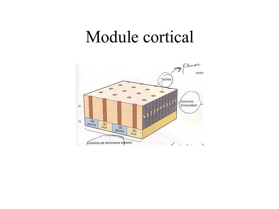Module cortical