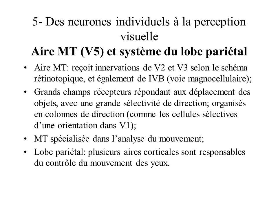 5- Des neurones individuels à la perception visuelle Aire MT (V5) et système du lobe pariétal Aire MT: reçoit innervations de V2 et V3 selon le schéma