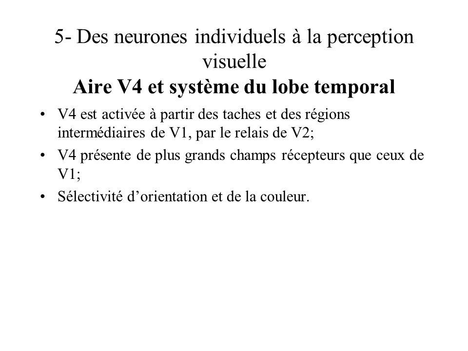 5- Des neurones individuels à la perception visuelle Aire V4 et système du lobe temporal V4 est activée à partir des taches et des régions intermédiai