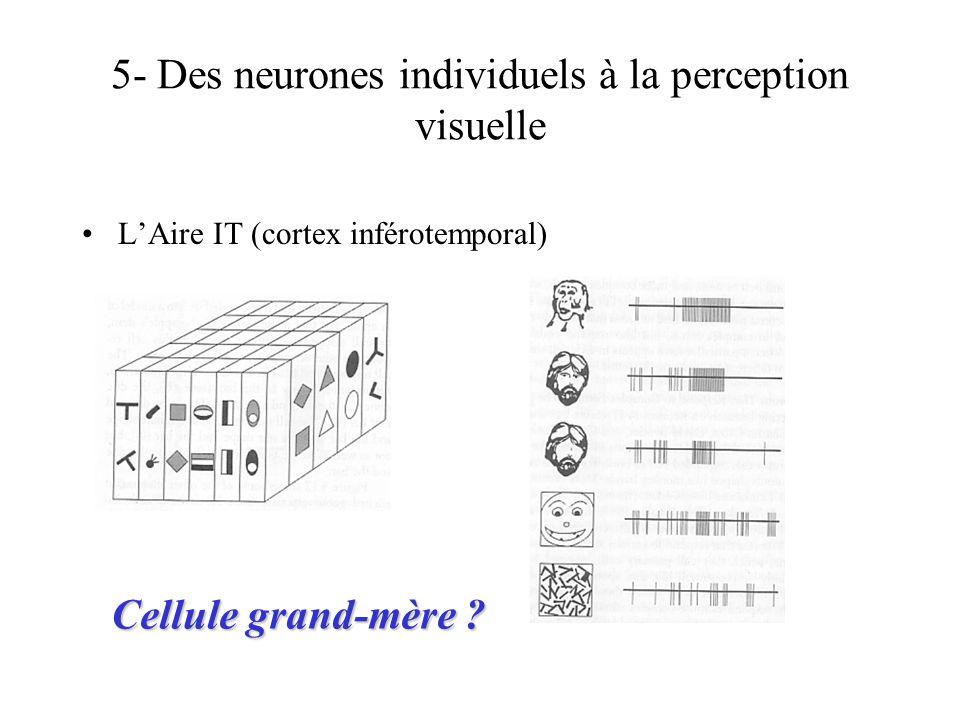5- Des neurones individuels à la perception visuelle LAire IT (cortex inférotemporal) Cellule grand-mère ?