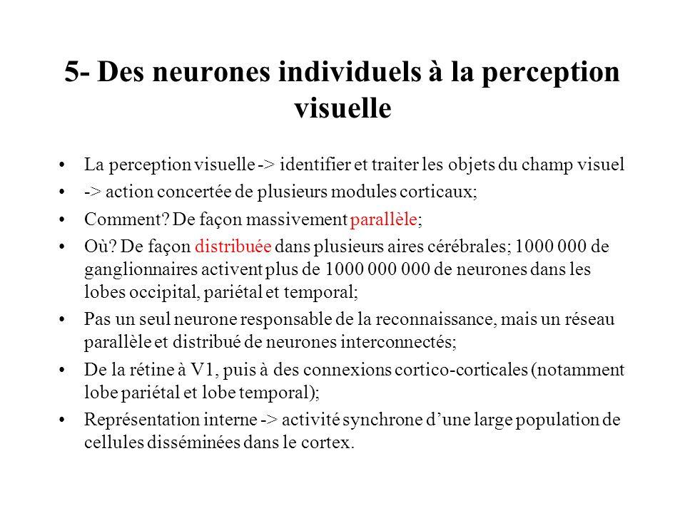 5- Des neurones individuels à la perception visuelle La perception visuelle -> identifier et traiter les objets du champ visuel -> action concertée de
