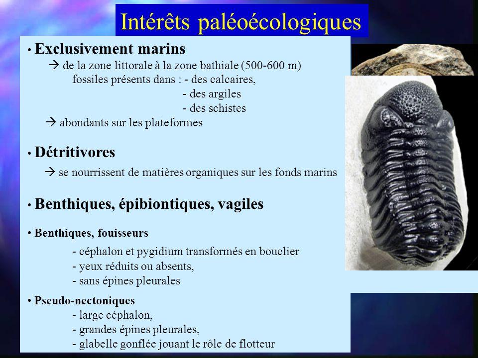 Histoire paléontologique Cambrien moy. 2° radiation qui profite dune large transgression marine extension des plateformes continentales maximum de div