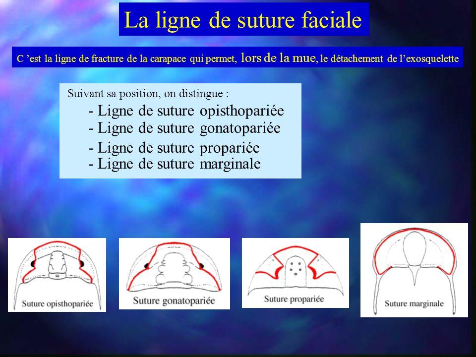 Organisation générale des Trilobites Face ventrale