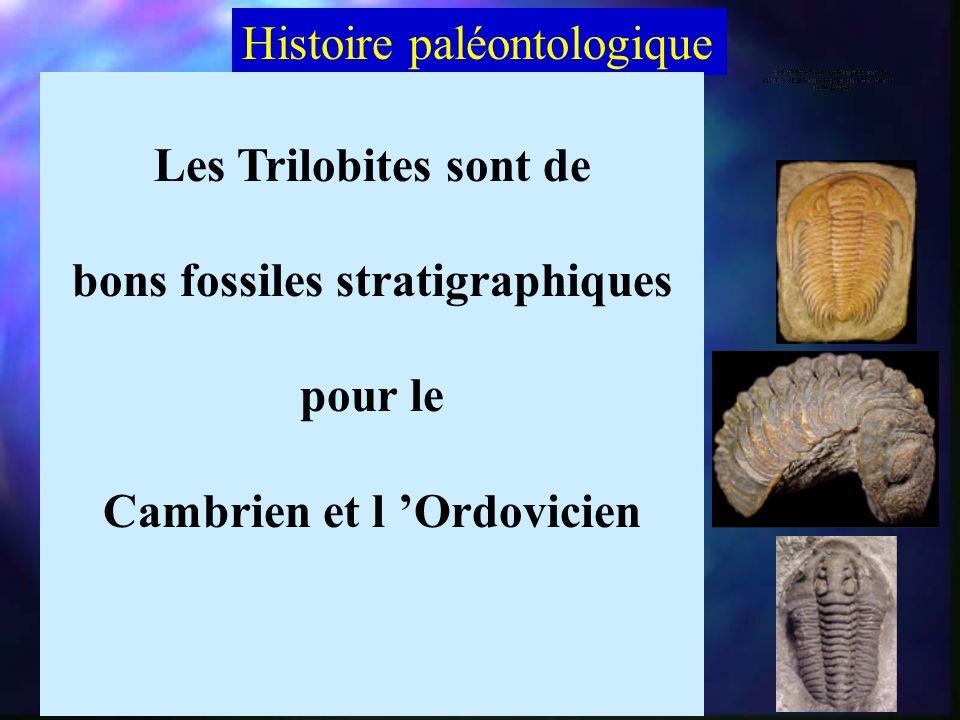 La volvation Les Trilobites ont la faculté de senrouler sur eux-mêmes Protection de la face ventrale