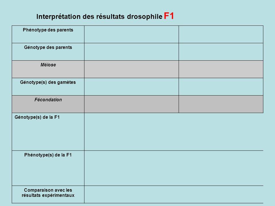 Interprétation des résultats drosophile F1 Phénotype des parents Génotype des parents Méiose Génotype(s) des gamètes Fécondation Génotype(s) de la F1 Phénotype(s) de la F1 Comparaison avec les résultats expérimentaux