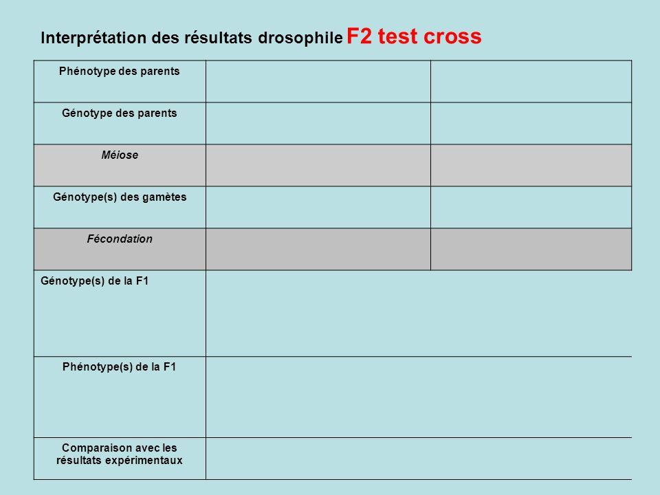 Interprétation des résultats drosophile F2 test cross Phénotype des parents Génotype des parents Méiose Génotype(s) des gamètes Fécondation Génotype(s) de la F1 Phénotype(s) de la F1 Comparaison avec les résultats expérimentaux