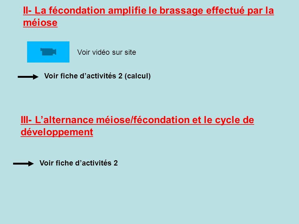 II- La fécondation amplifie le brassage effectué par la méiose Voir fiche dactivités 2 (calcul) Voir vidéo sur site III- Lalternance méiose/fécondation et le cycle de développement Voir fiche dactivités 2