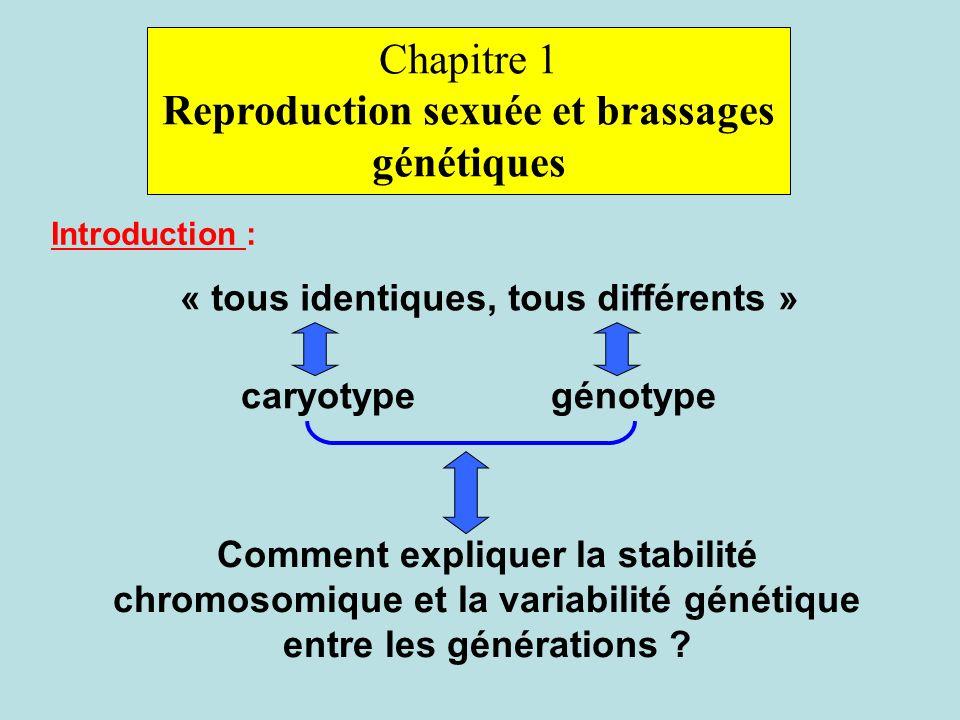 Chapitre 1 Reproduction sexuée et brassages génétiques Introduction : « tous identiques, tous différents » caryotypegénotype Comment expliquer la stabilité chromosomique et la variabilité génétique entre les générations ?