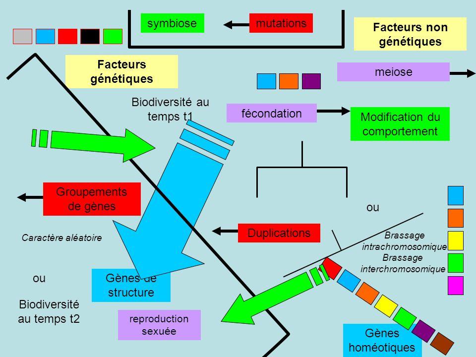 Modification du comportement reproduction sexuée symbiose Caractère aléatoire Brassage interchromosomique Brassage intrachromosomique Gènes de structure Gènes homéotiques Facteurs génétiques Facteurs non génétiques Biodiversité au temps t1 Biodiversité au temps t2 ou fécondation meiose mutations Duplications Groupements de gènes